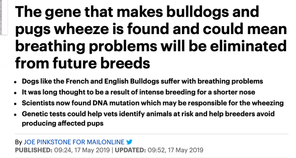 No, we have NOT found the mutation that causes breathing problems in brachycephalic dogs